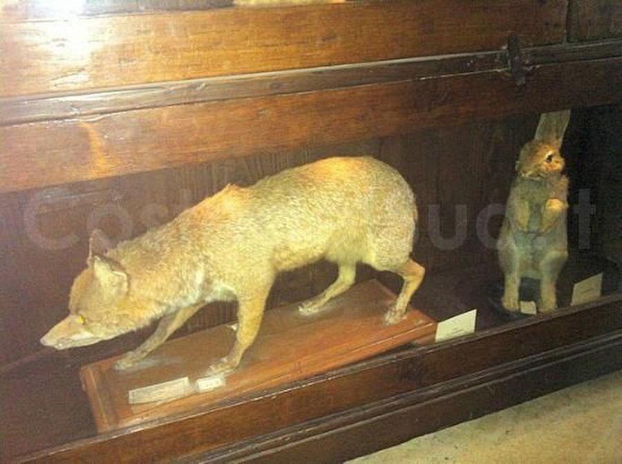 animali Imbalsamati Museo Civico Emanuele Barba