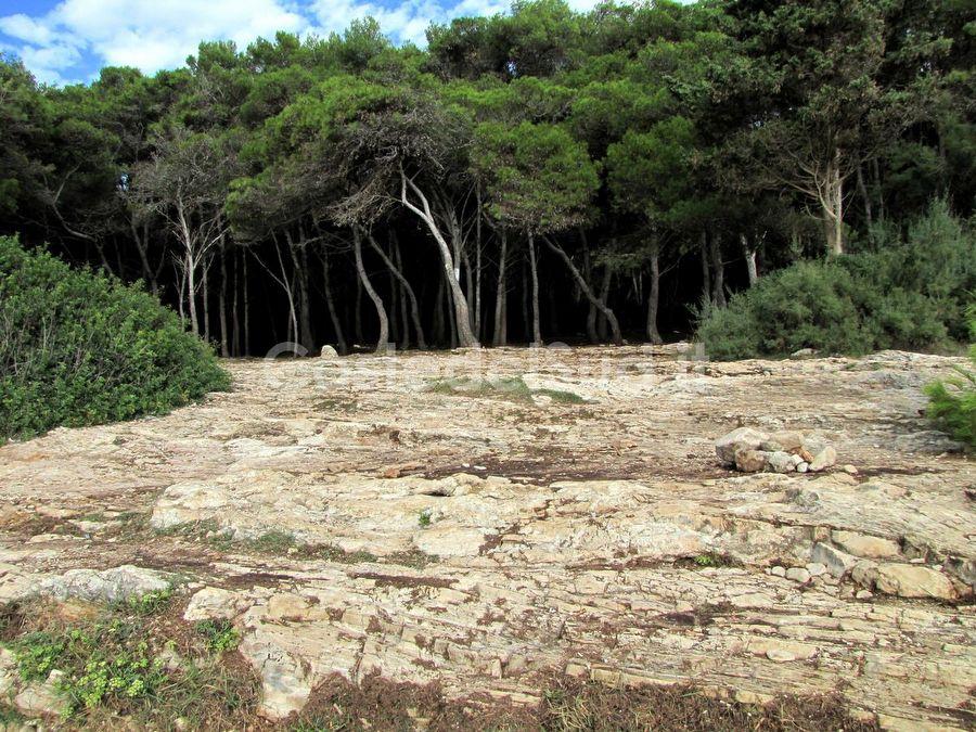 il Bosco Porto Selvaggio