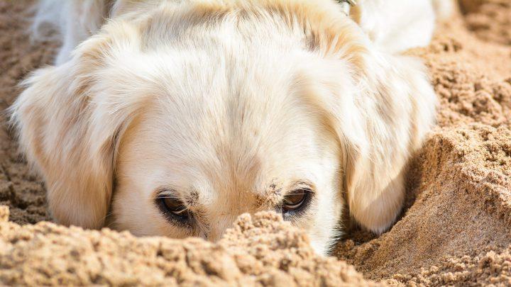 Cani in spiaggia, nuove regole